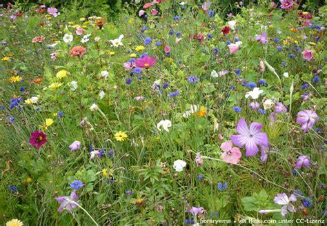 naturgarten anlegen wie entsteht der eigene wildgarten