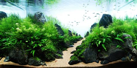 legendary aquarist takashi amano aquarium architecture