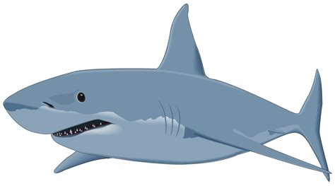 Shark Image Shark Clipart Shark Clipart