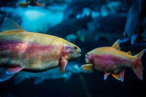 aquarium eau douce loir et cher