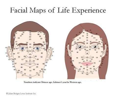 Chinese Face Map Chinese Face Reading Chart