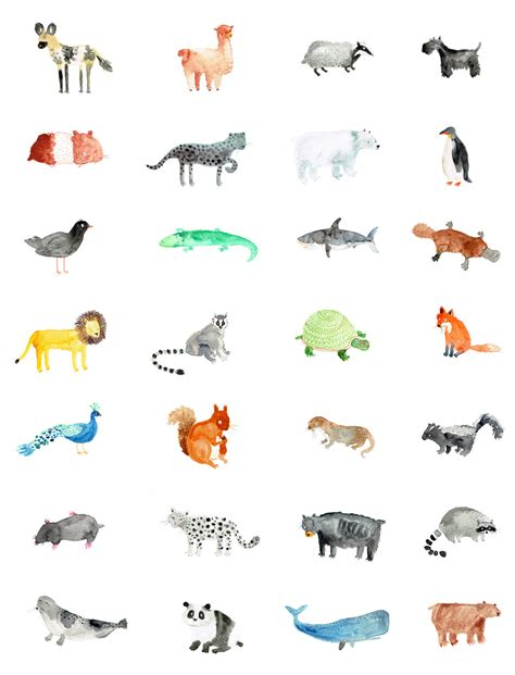 day  animal drawings lorna scobie illustration