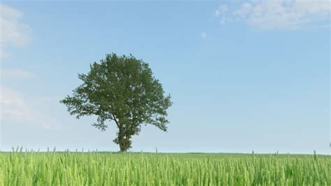 Single Tree Growing Time Lapse With Wind Animation Stock