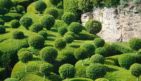 wann werden hortensien geschnitten buchsbaum schneiden zeitpunkt hilfsmittel formen