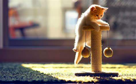 Funny Cat Hd Wallpapers