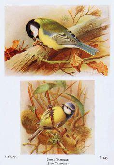 knickoftimefree printables antique graphics ideas