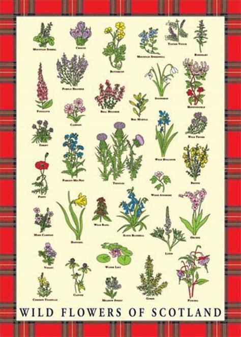 kitchen collection reviews flowers of scotland tea towel