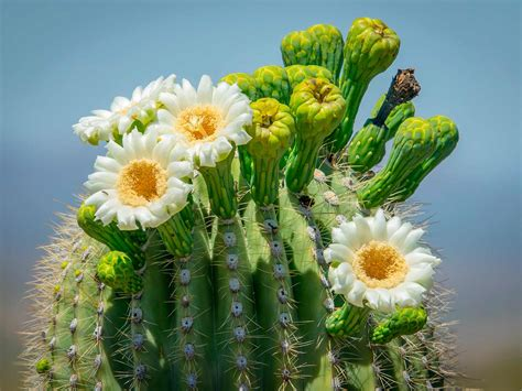 How To Look After A Cactus Plant | Love The Garden