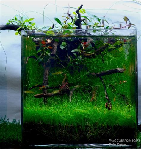 Cube Aquarium Aquascape by 17 Best Images About Cube Aquascape Ideas On