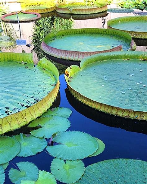 Botanischer Garten Zürich Oeffnungszeiten by Botanischer Garten Zuerich