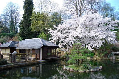 Japanischer Garten Wien Kirschblüte by Das Kirschbl 252 Tenfest Im Japanischen Garten Kaiserslautern