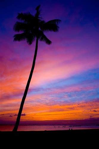 hawaii sunset palm tree cliche  finally   chance