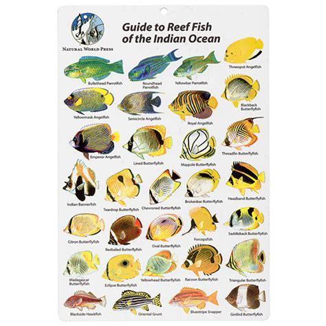 indian ocean fish id card