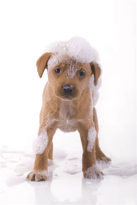 Treating Your Pooch To A Bath  Dogslife Dog Breeds Magazine