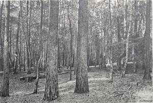 Forest Drawing I - 2013. Graphite Pencil on Cartridge Paper