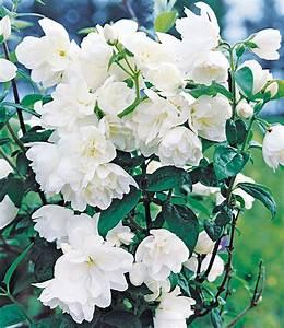 Blühende Hecken Sträucher : 5 meter bl h hecken kollektion 6 pflanzen g nstig online ~ Watch28wear.com Haus und Dekorationen