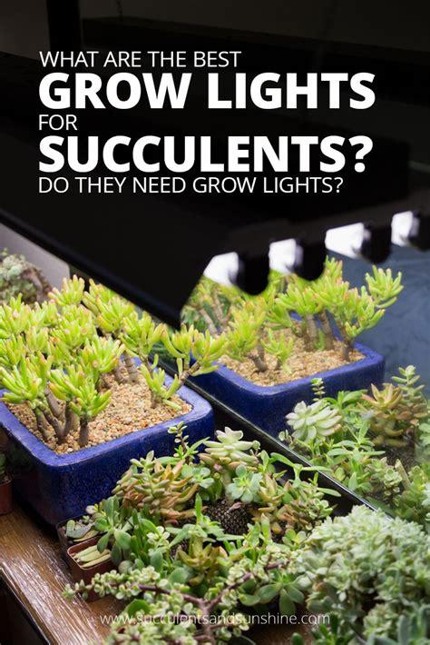 best grow lights for seedlings 17 best ideas about grow lights on pinterest grow lights