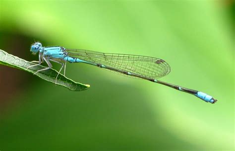 Animated Dragonfly Wallpaper - animated dragonfly wallpaper wallpapersafari