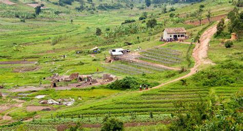 Rwanda | TechnoServe - Business Solutions to Poverty