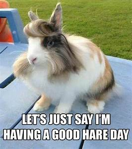 BAD HAIR DAY Quotes Like Success