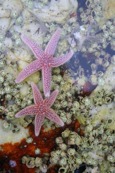 50 Best Star Fish Starfish Sea Star Images On Pinterest