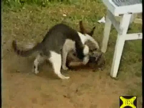 hund gegen katze video lustichde