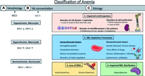 Classification Of Anemia. Anemic Conditions Can Be Clas