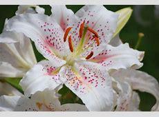 Flores e seus significados como escolher para presentear