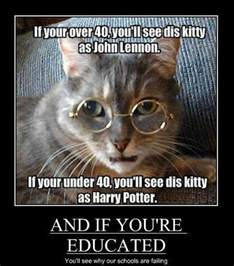 harry potter cat pictures of the day 80 pics