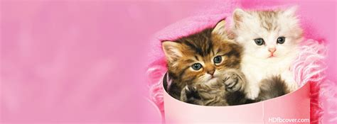 cover for cats kittens inside shoes fb covers