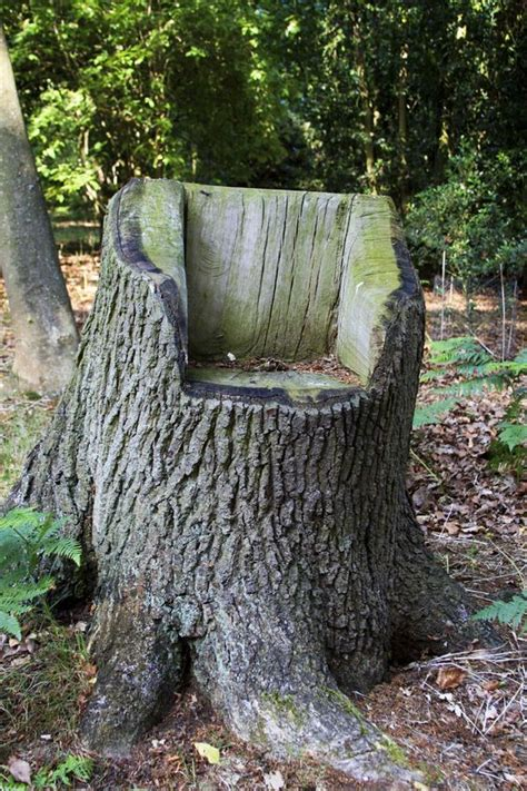 decorate  garden  tree stumps   amazing