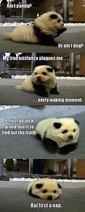 30 Funny animal captions - part 9 (30 pics) | Amazing ...