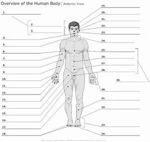 Anatomy Body Regions Labeling Worksheet