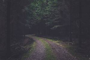 free, images, , , nature, , green, , atmospheric, phenomenon, , tree, , natural, environment, , light, , forest
