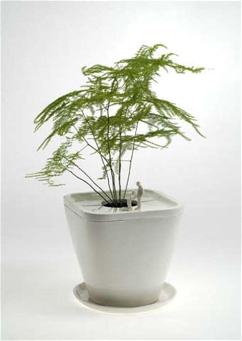contemporary pot plants modern pot plant