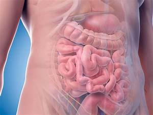 Gut Bacteria May Play Role In Heart Attack Recovery