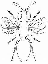Coloring Bug Pages Insect Printable Insects Parts Body Firefly Realistic Bugs Bestcoloringpagesforkids Templates Template Children Cartoon Getcolorings sketch template