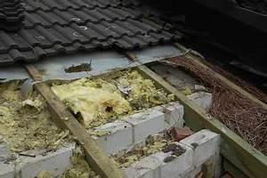 Zwischendecke Aus Holz : marder im dach ~ Sanjose-hotels-ca.com Haus und Dekorationen