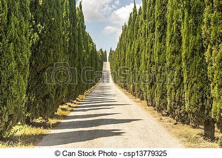 camino toscano toscana cipreses camino pisa italy toscana