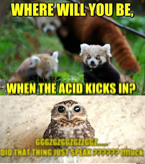 Red Panda Meme - rmx dude like red pandas by scapulasnap meme center