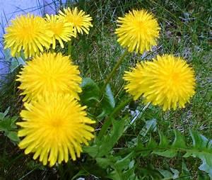 Aktuelle Blumen Im April : mein hausmeister lachmund m rz 2016 ~ Markanthonyermac.com Haus und Dekorationen