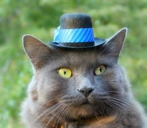 hats for cats the green