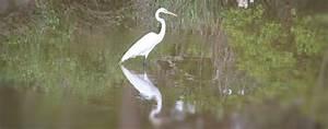 Do Your Part: Help Protect Our Estuaries