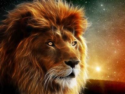 Lion Animal Wallpapers13