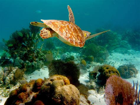 marine protected area national geographic society