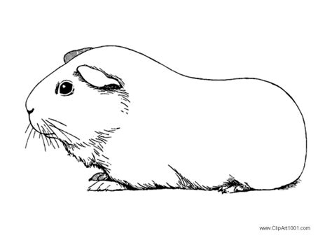 black and white coloring pages guinea pig coloring pages black and white free printable