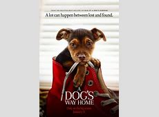 A Dog's Way Home Movie Trailers iTunes