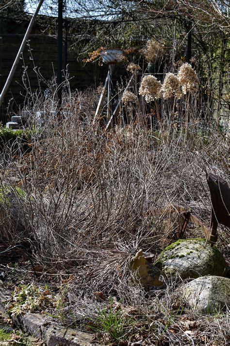 hortensienschnitt im herbst garten arbeiten im fr 220 hjahr tipps www vintage diary