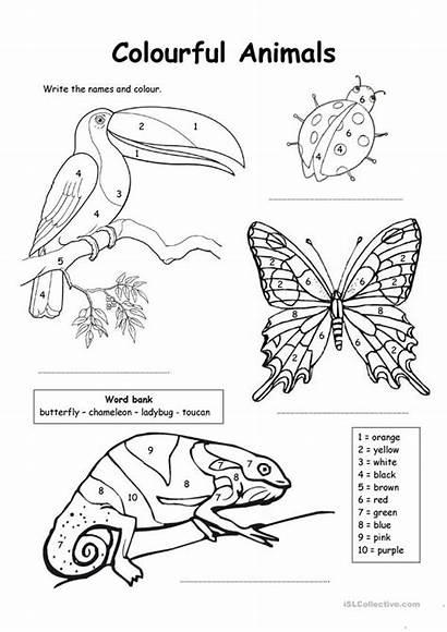 Animals Colour Numbers Colourful Worksheets Worksheet Esl