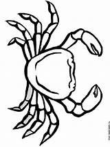 Crab Coloring Crabs Fish Mycoloring Ausmalbilder Krabbe Printable Ausdrucken Malvorlagen Kostenlos Zum sketch template